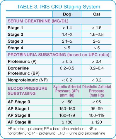 Kidney function in Pets