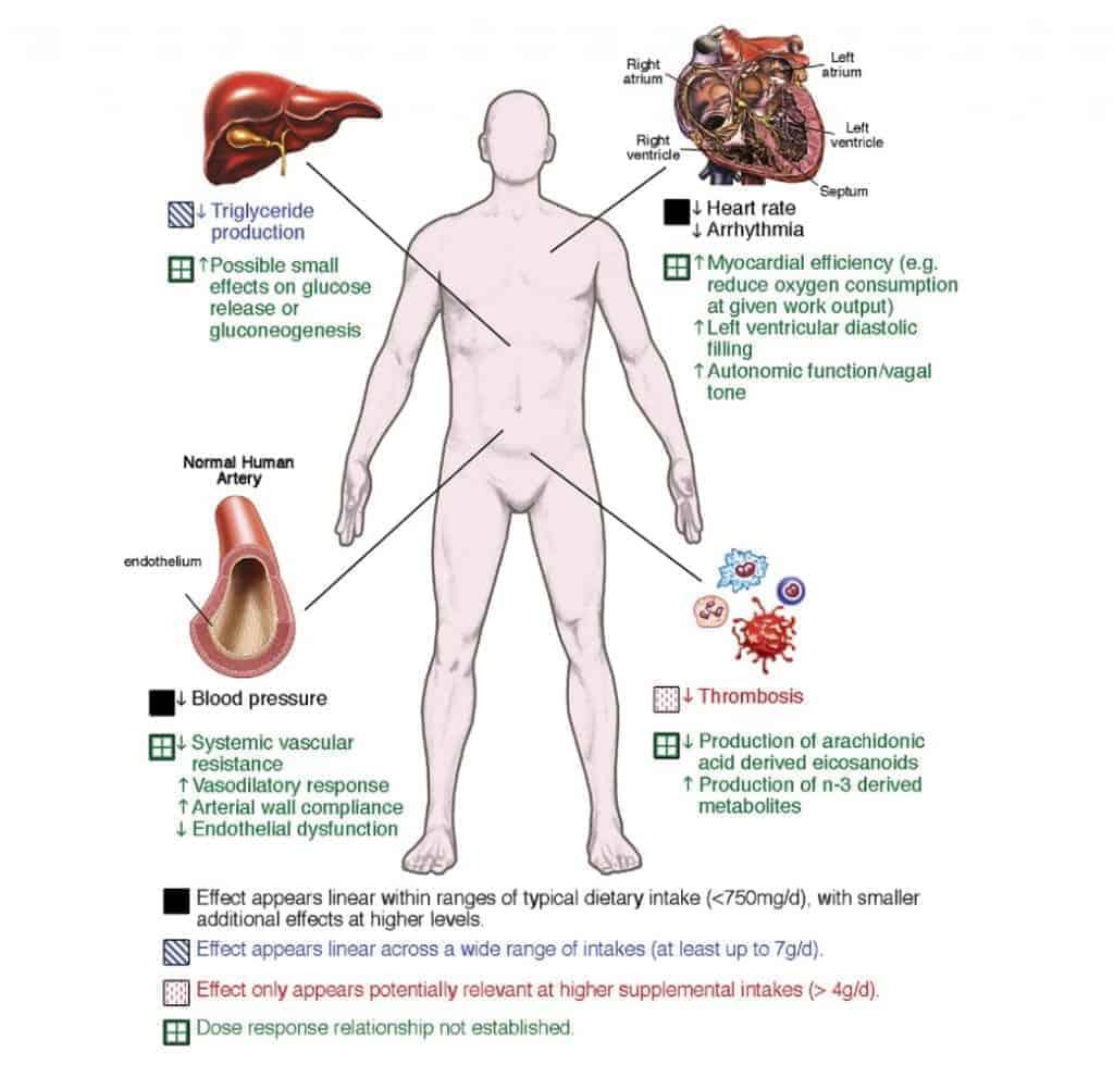Fish oil in cardiovascular disease