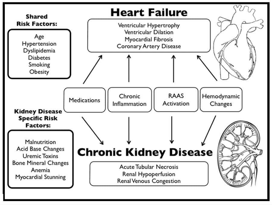 Heart disease and kidney disease