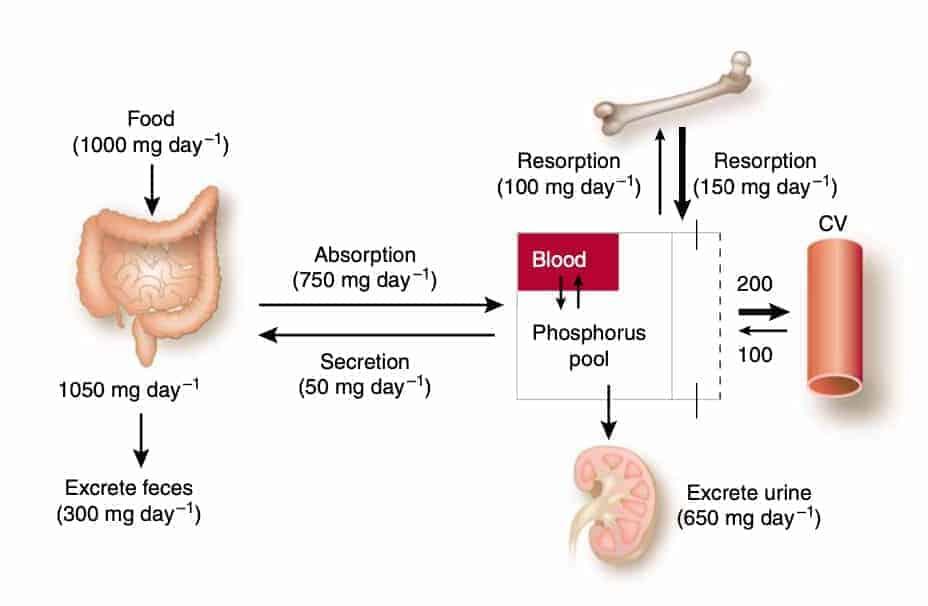 Phosphorous food and CKD