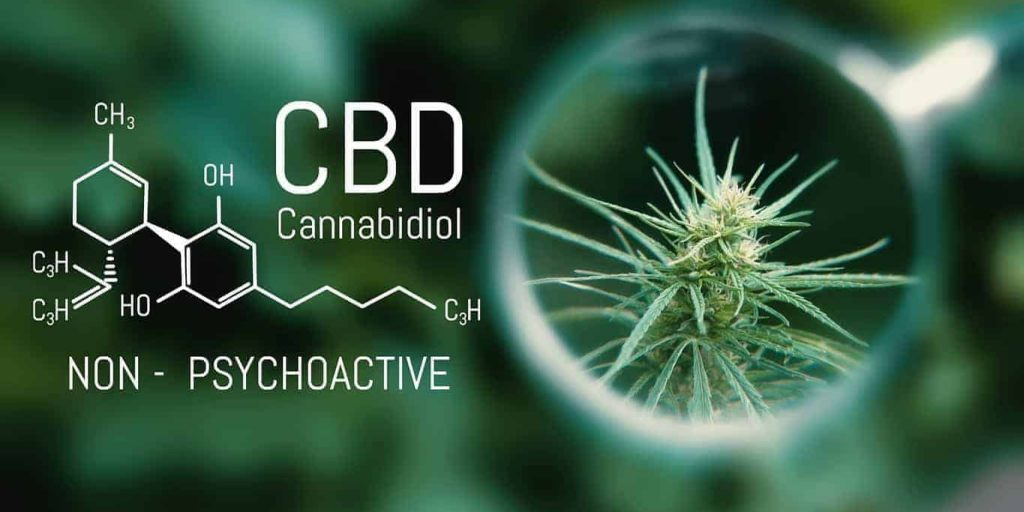 Kidney disease, CBD oil, Renal health, Pain, Medical Cannabis and Cannabidiol CBD Oil Chemical Formula. Growing Premium Marijuana products. Influence positive and negative of smoking marijuana on human brain, nervous system, mental activity and functions, cognitive functioning, development