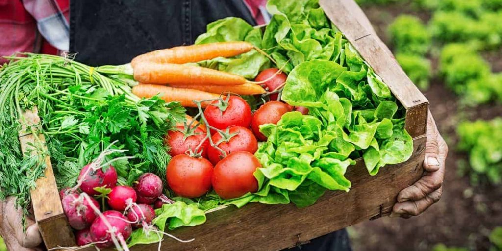 organic food, organic food in CKD, organic food chronic kidney disease, eating right for CDK, diet CKD