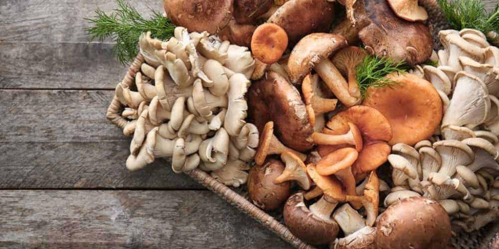 Medicinal mushrooms and Kidney disease