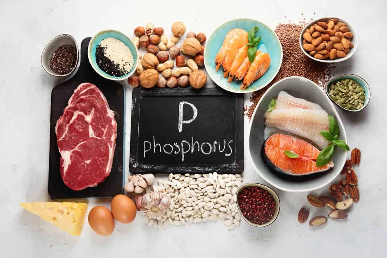 Foods highest in phosphorus