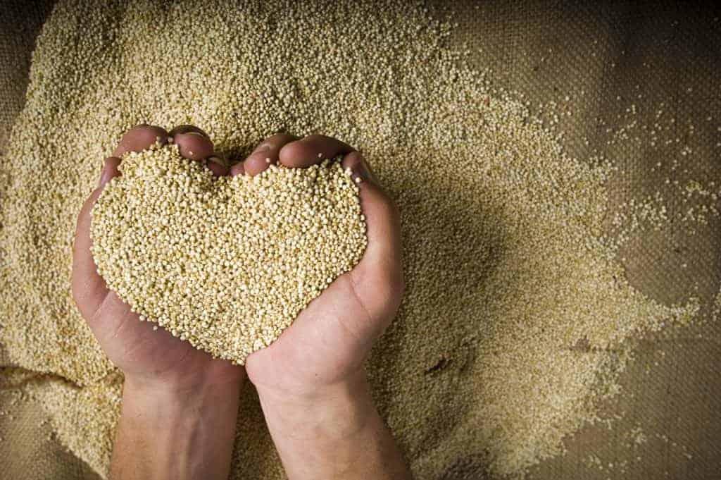 quinoa, quinoa recipe