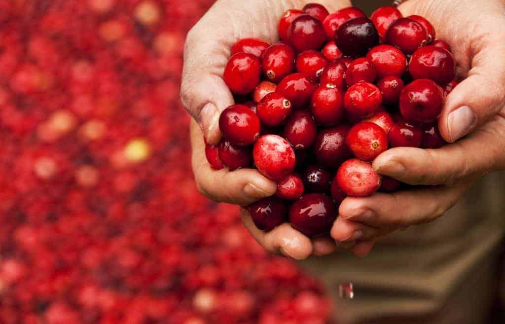 Hawthorn berries for CVD