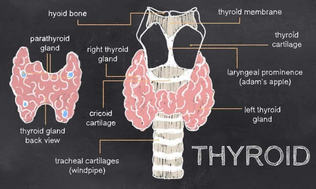 psrathyroid and CKD, parathyroid in chronic kidney disease, hyperparathyroidism