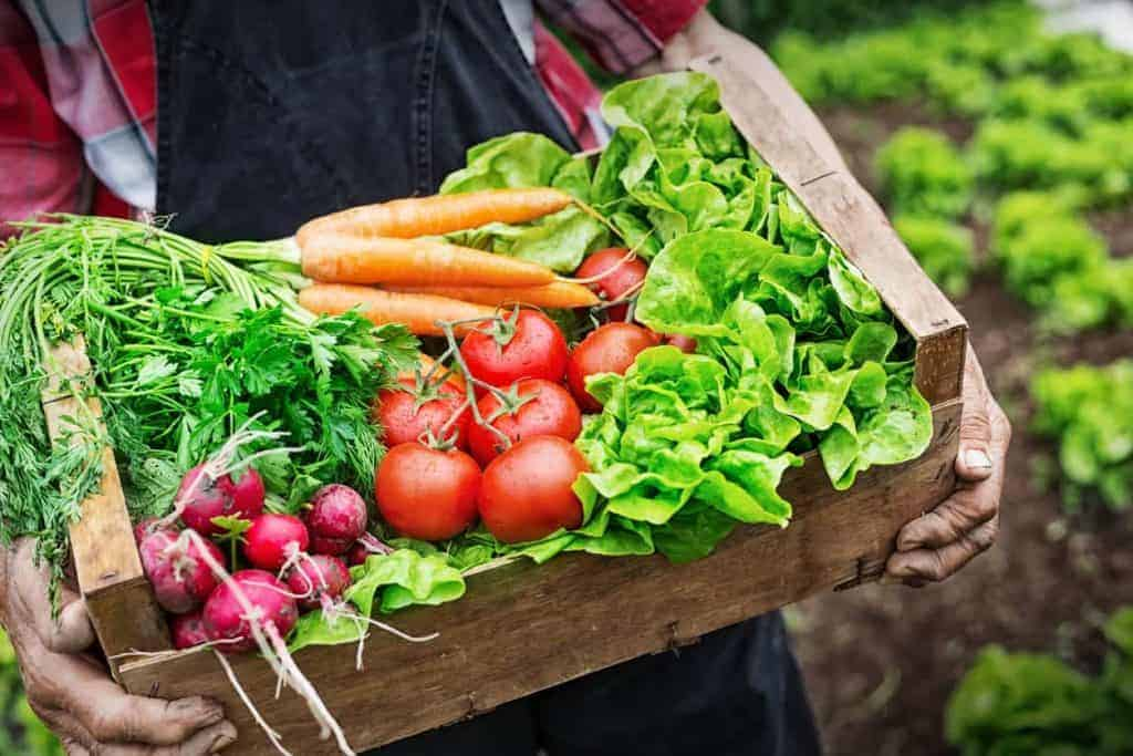 organic food, organic food in CKD, organic food chronic kidney disease, eating right for CDK, diet CKD