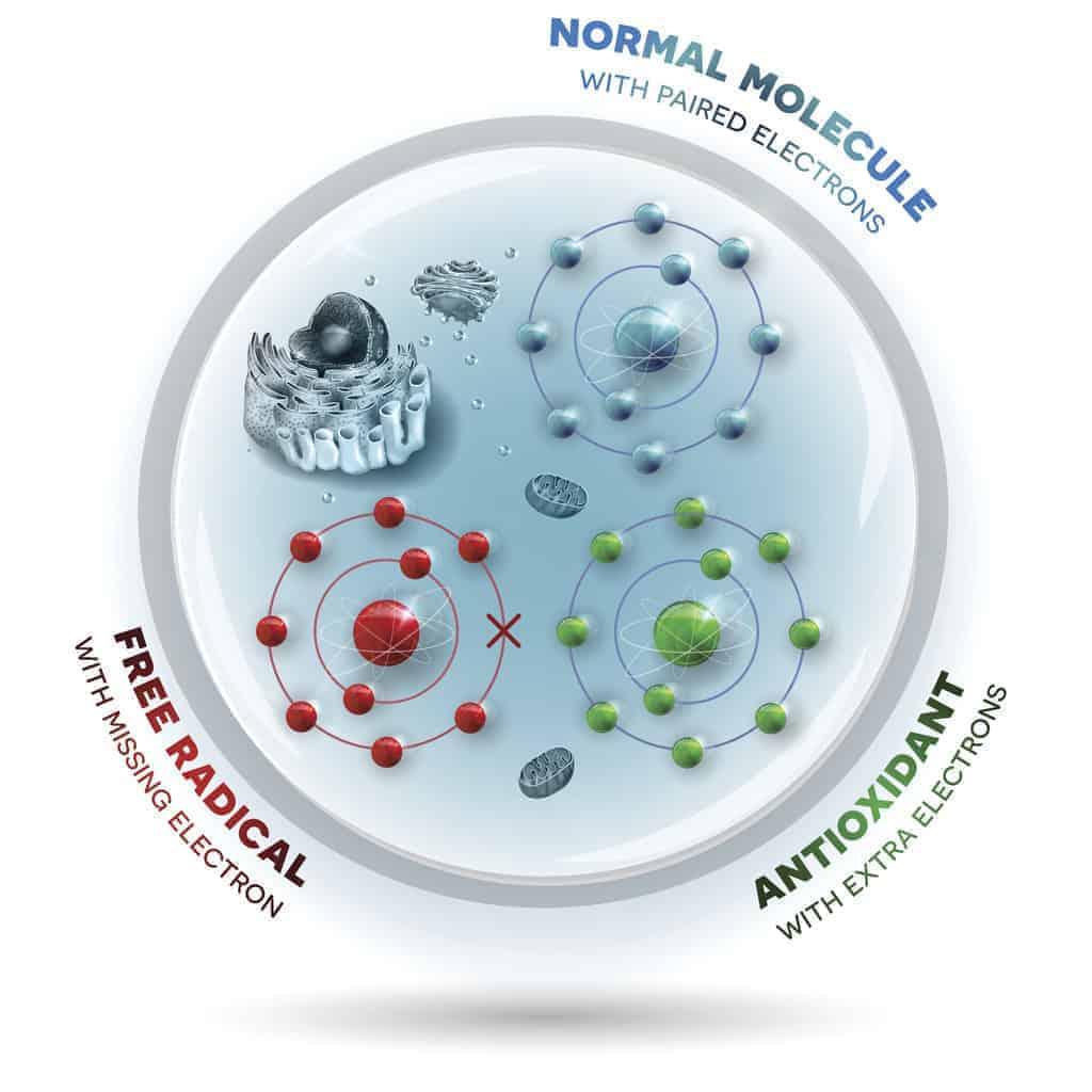 How Free Radicals and antioxidants work