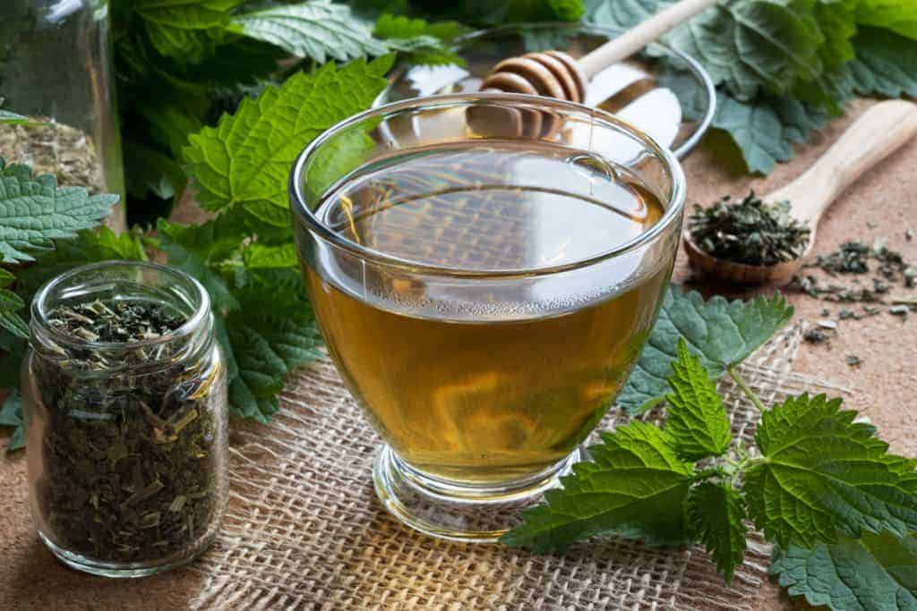 nettle tea for CKD, nettles improve renal function