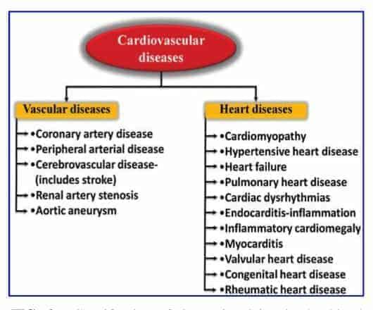 cardiovascular disease and Kidney disease