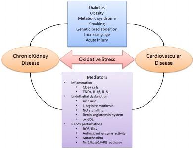 Link between CVD and CKD