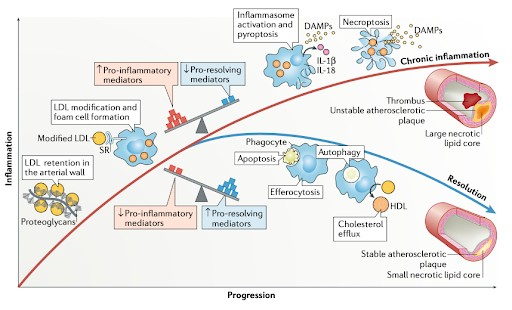 inflammation and CVD and CKD